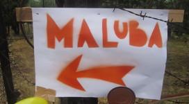 Segui Maluba!